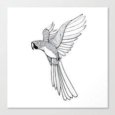 parakit sketch Canvas Print