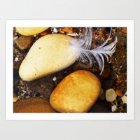 Gull Feather Lies Softly on the Stones Art Print