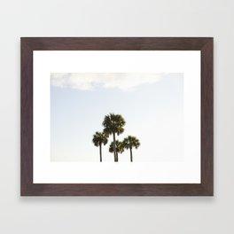 Four Palms Framed Art Print