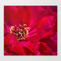peony Canvas Prints featuring Peony by Christine Belanger