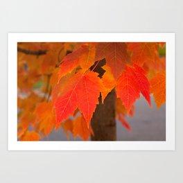 Crimson Fall Art Print