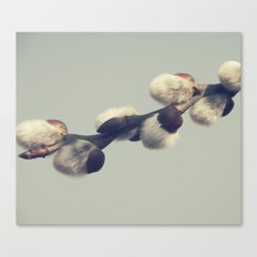 Fluffy gray Canvas Print