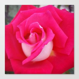 Rose Two-Tone Canvas Print