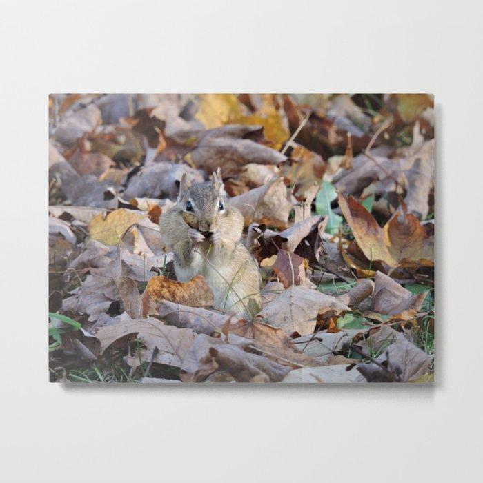 Chipmunk Gathering Seeds Metal Print