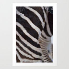Zebra 02 Art Print