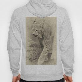 beautiful lynx Hoody