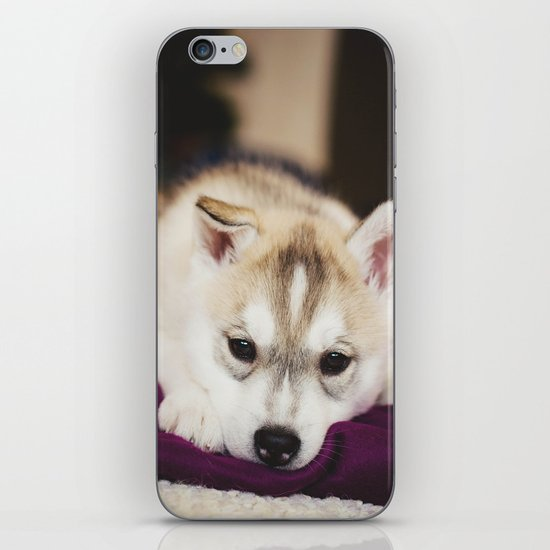 husky puppy. iPhone & iPod Skin