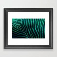 Zebra Path Framed Art Print