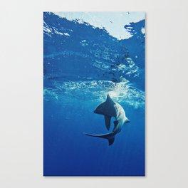 Shark Swimming Canvas Print