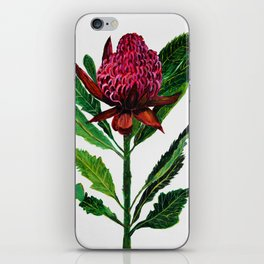 Red Flowers Floral Waratah Protea, botanical iPhone Skin