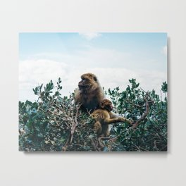 Macaque Mother and Daughter Metal Print