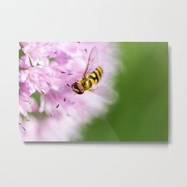 Hoverfly on Allium - Onion Flower 6 Metal Print