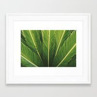palm tree Framed Art Prints featuring palm tree by Life Through the Lens