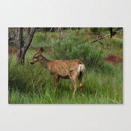 Breakfast At Mesa Verde Canvas Print
