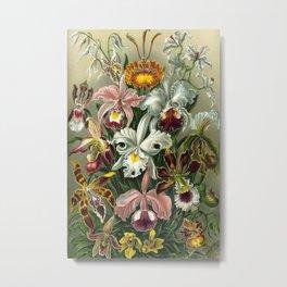 Ernst Haeckel Metal Print