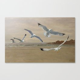 Seagulls Flying Along the Beachfront Canvas Print