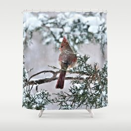 Snow on His Back (Northern Cardinal) Shower Curtain