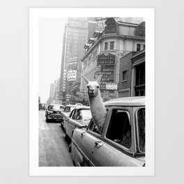 Llama Riding In Taxi Art Print