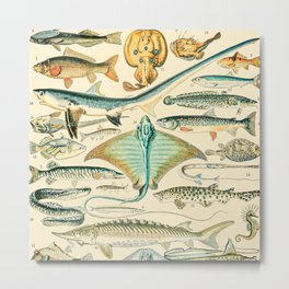 Vintage Fish Diagram // Poissons II by Adolphe Millot XL 19th Century Science Textbook Artwork Metal Print