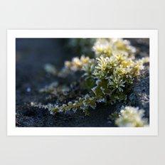 Frosty Moss Art Print