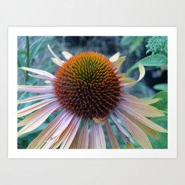 #406 Echinacea angustifolia  house  bitterroot mt macro  BITTERROOT MT Art Print