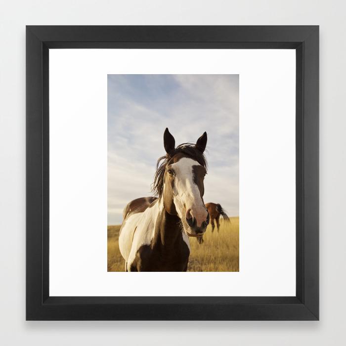 Western Paint Horse Framed Art Print By Applesandoatsphotography Society6