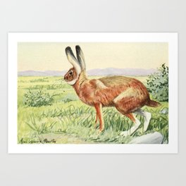 (1874-1927) - Burgess Animal Book for Children 1920 (Jack Rabbit) Art Print