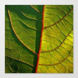 leaf structure macro IV Canvas Print