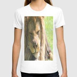 The lion sleeps tonight T-shirt