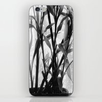 bamboo iPhone & iPod Skins featuring Bamboo by Lindzey42