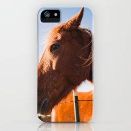 Horse. Palo Duro Canyon, Texas. iPhone Case