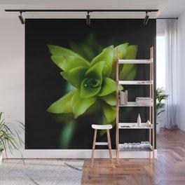Aptenia succulent plant Wall Mural