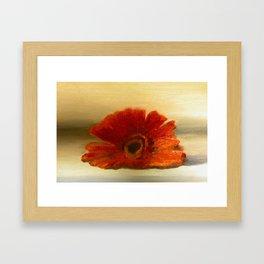 Gerber Daisy  Framed Art Print