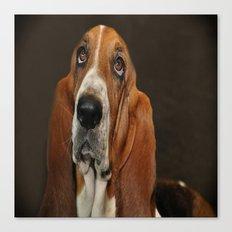 Lost In Thought Basset Hound Dog Canvas Print