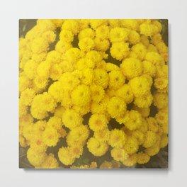 Autumn Gold - Chrysanthemums Metal Print