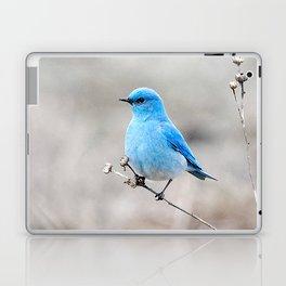 Mountain Bluebird on the Tansy Laptop & iPad Skin