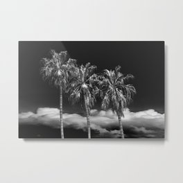 Palm Trees in Black and White on Cabrillo Beach Metal Print