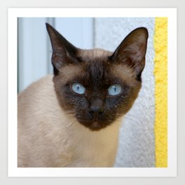 bluepoint siamese cat Art Print