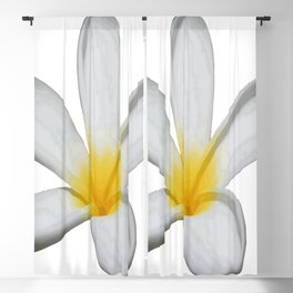 A Single Plumeria Flower Isolated Blackout Curtain