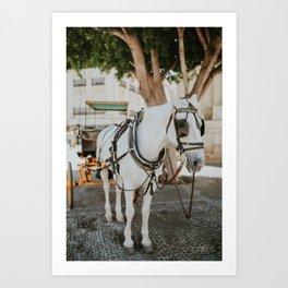 White Horse in Seville Art Print