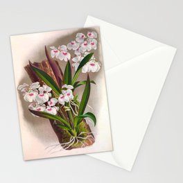 Ionopsis Paniculata Vintage Little White Orchids Stationery Cards
