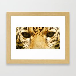 Jaguar Eyes Framed Art Print