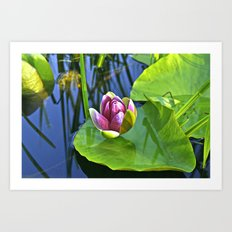 Summery Ode to the WATER LILY  Art Print