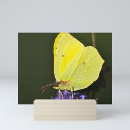 Yellow Butterfly On Purple Flower Mini Art Print