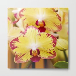 Close up Orchid #8 Metal Print