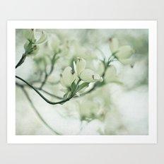 dogwood flowers Art Print