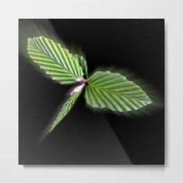 Dragonfly shaped leaves Metal Print