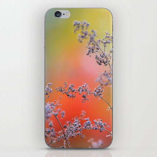 Flowers in autumn iPhone & iPod Skin