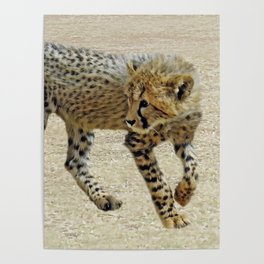 Baby cheetah learning to stalk Poster