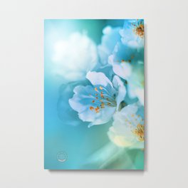A sun kiss on a sakura Metal Print